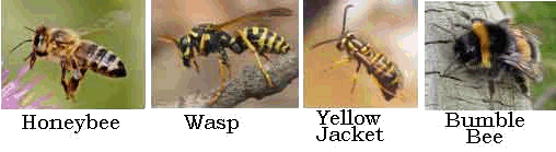 Bee-Wasp-comparison (10K)